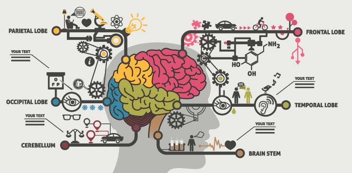 nlp model communication brain lobes